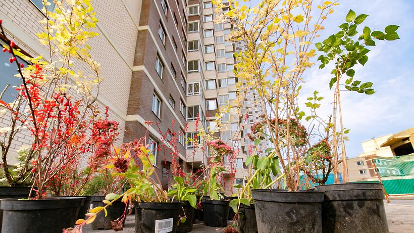 Почти две тысячи деревьев и кустарников высадили в Реутове в рамках экоакции в сентябре