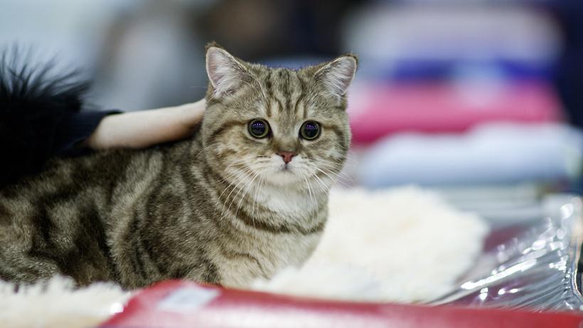 Роскошь клуб кошек в москве вакансия в клубах для парней в москве