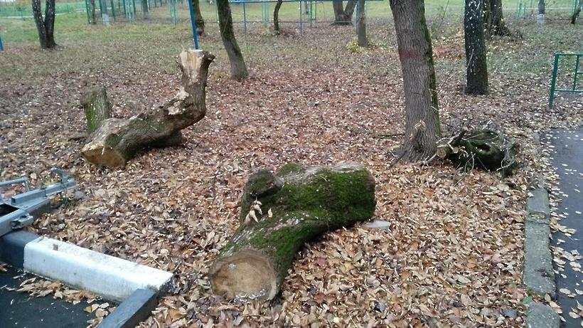 Рабочие убрали порубочные остатки со двора в Подольске по просьбе жителя
