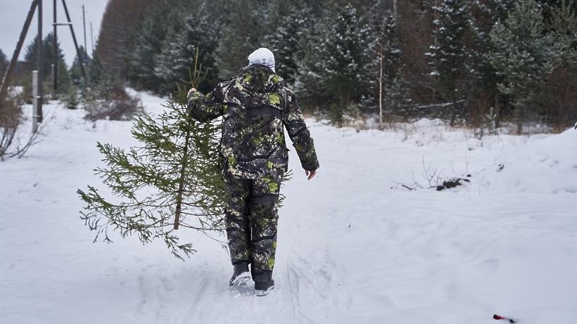 За нелегальную рубку елок в Подмосковье могут посадить на 2 года