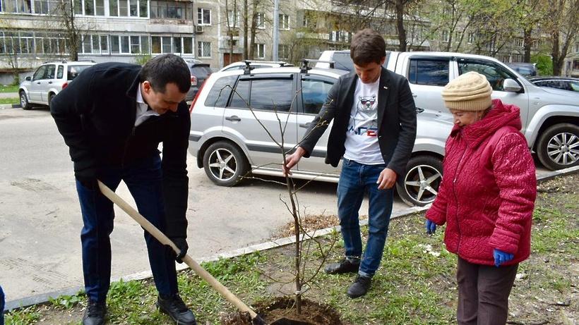 Более 10 саженцев крупнолистовых лип высадили на Октябрьской улице Балашихи