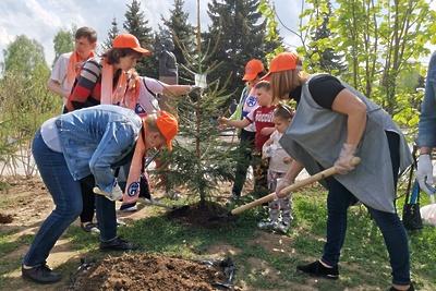 Около 400 деревьев посадили в Королеве в рамках акции «Лес Победы»