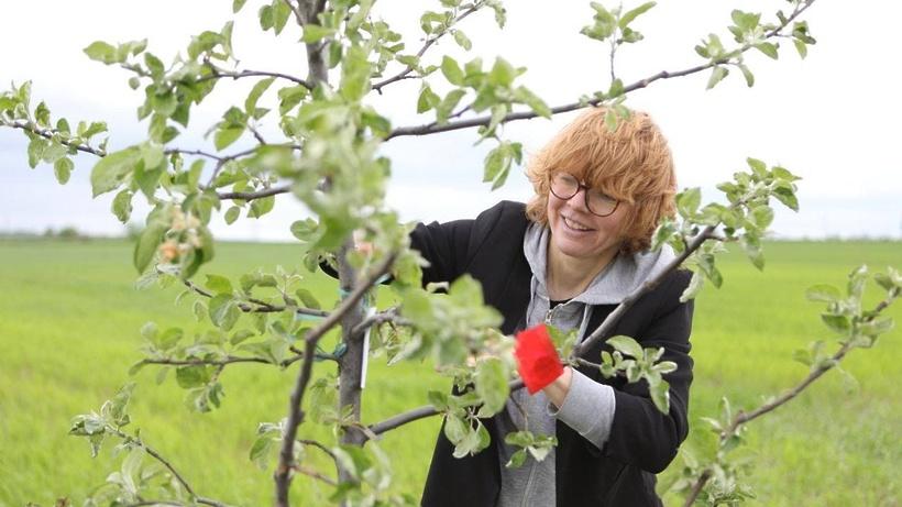 Яблоневый сад зацвел у усадьбы Достоевского в Зарайске спустя 200 лет